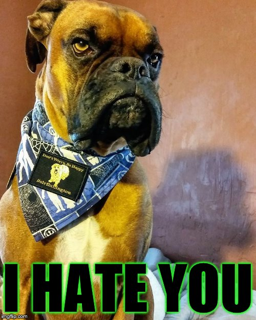 Grumpy Dog | I HATE YOU | image tagged in grumpy dog | made w/ Imgflip meme maker