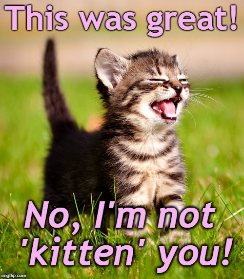 This was great! No, I'm not 'kitten' you! | image tagged in yep i'm awesome | made w/ Imgflip meme maker