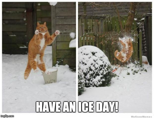 N'ice day. | HAVE AN ICE DAY! | image tagged in snowball cat,nice day,nice,funny,cat,day | made w/ Imgflip meme maker