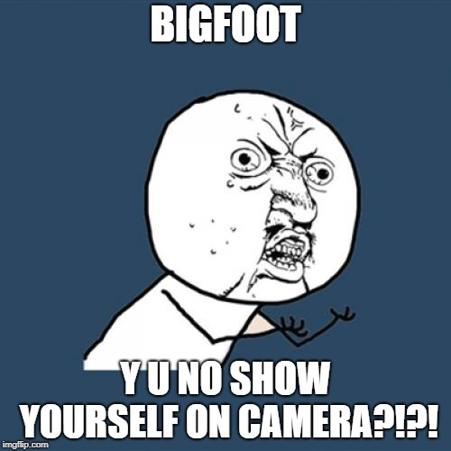 Y U No Meme | BIGFOOT Y U NO SHOW YOURSELF ON CAMERA?!?! | image tagged in memes,y u no | made w/ Imgflip meme maker
