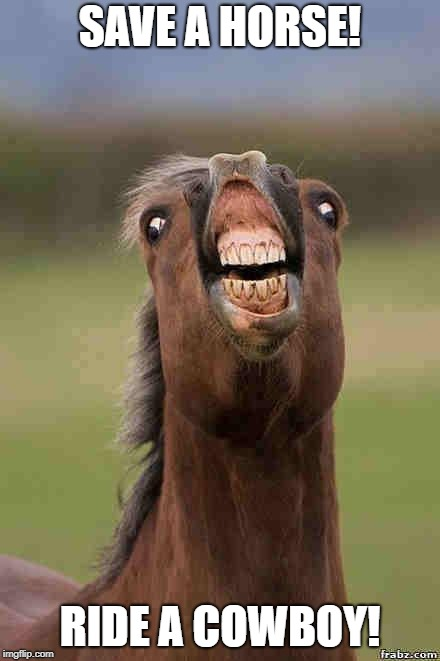 horse face | SAVE A HORSE! RIDE A COWBOY! | image tagged in horse face | made w/ Imgflip meme maker