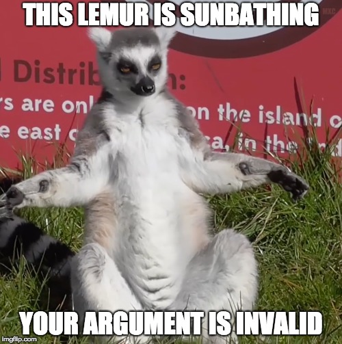 This lemur is sunbathing: Your argument is invalid | THIS LEMUR IS SUNBATHING YOUR ARGUMENT IS INVALID MXC | image tagged in sunbathing lemur,your argument is invalid,lemur,logic,ad hominem,reaction gifs | made w/ Imgflip meme maker
