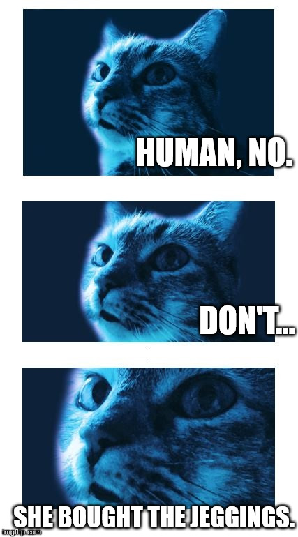 Blue Cat is Judging You | HUMAN, NO. SHE BOUGHT THE JEGGINGS. DON'T... | image tagged in blue cat is judging you | made w/ Imgflip meme maker