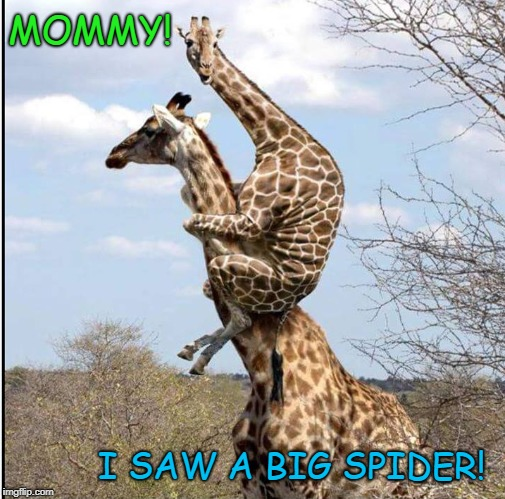 Not Again, Kid | MOMMY! I SAW A BIG SPIDER! | image tagged in funny,scared giraffe,bored mother | made w/ Imgflip meme maker