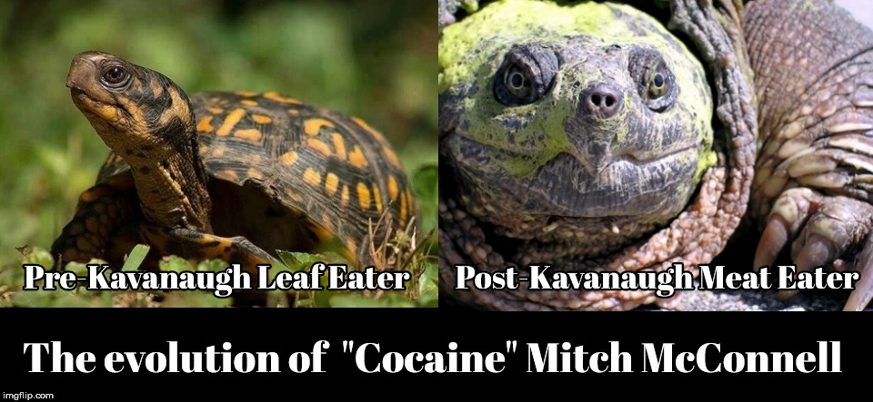 Evolution of Mitch McConnell | image tagged in mitch mcconnell,turtle,kavanaugh,maga,trump | made w/ Imgflip meme maker
