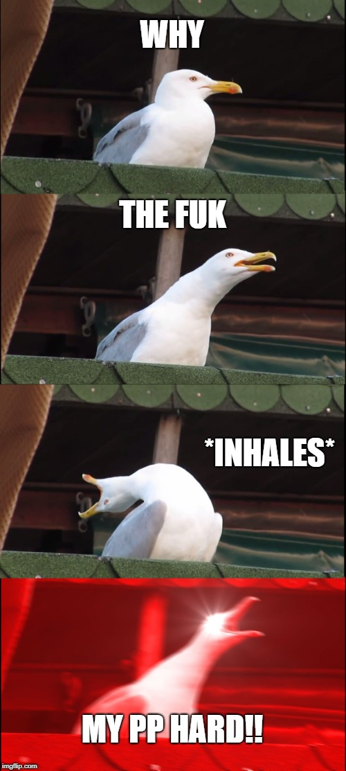 Inhaling Seagull Meme | WHY THE FUK *INHALES* MY PP HARD!! | image tagged in memes,inhaling seagull | made w/ Imgflip meme maker