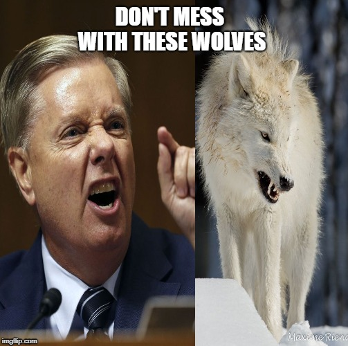 DON'T MESS WITH THESE WOLVES | image tagged in lindsey graham,congress,white house,white privilege,white man,white people | made w/ Imgflip meme maker