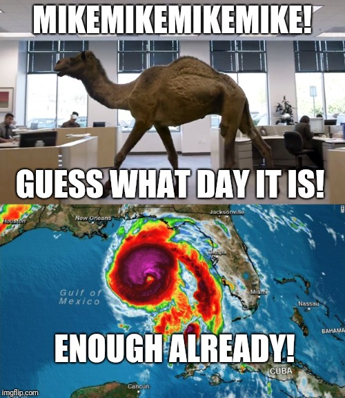 MIKEMIKEMIKEMIKE! GUESS WHAT DAY IT IS! ENOUGH ALREADY! | image tagged in memes,hump day camel,hurricane,hurricane michael | made w/ Imgflip meme maker