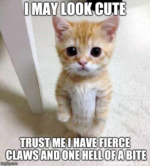 Cute Cat | I MAY LOOK CUTE TRUST ME I HAVE FIERCE CLAWS AND ONE HELL OF A BITE | image tagged in memes,cute cat | made w/ Imgflip meme maker