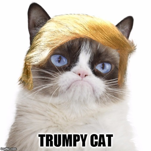 Imgflip is Amazing Just Amazing I Purr-sonally Think It's the Best | image tagged in meme,trump,trumpy cat approved,politics lol | made w/ Imgflip meme maker