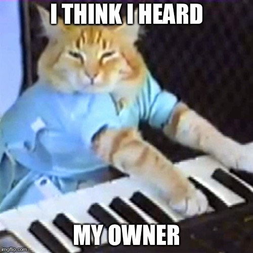 I THINK I HEARD MY OWNER | image tagged in keyboard cat | made w/ Imgflip meme maker