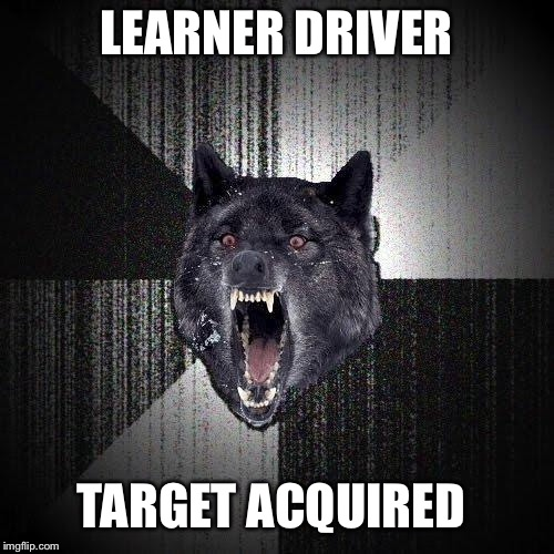 LEARNER DRIVER TARGET ACQUIRED | image tagged in insany wolf | made w/ Imgflip meme maker