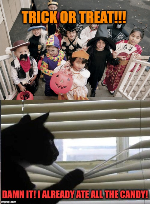 Tricks Incoming | TRICK OR TREAT!!! DAMN IT! I ALREADY ATE ALL THE CANDY! | image tagged in funny memes,halloween,halloween is coming,cat,kids | made w/ Imgflip meme maker