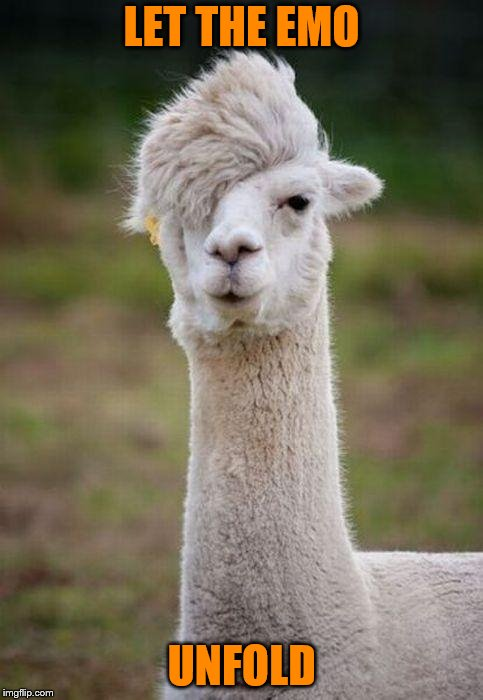 Emo Llama | LET THE EMO UNFOLD | image tagged in emo llama | made w/ Imgflip meme maker