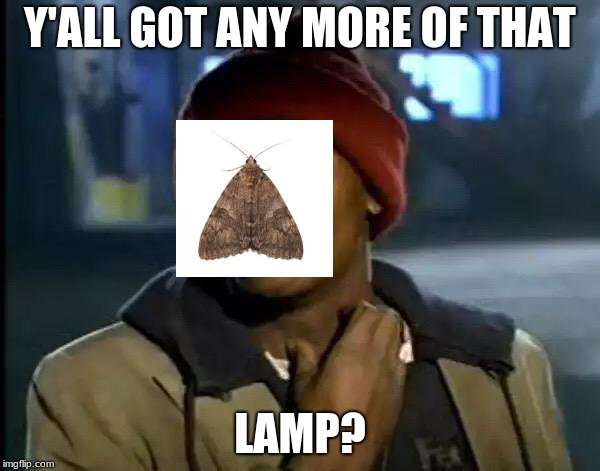 Moth Meme 2: Electric Boogaloo |  Y'ALL GOT ANY MORE OF THAT; LAMP? | image tagged in memes,y'all got any more of that,moth,moth meme | made w/ Imgflip meme maker