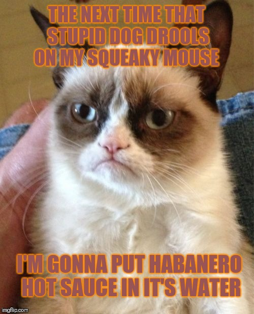 Grumpy Cat | THE NEXT TIME THAT STUPID DOG DROOLS ON MY SQUEAKY MOUSE I'M GONNA PUT HABANERO HOT SAUCE IN IT'S WATER | image tagged in memes,grumpy cat,hot sauce,food,pets,funny | made w/ Imgflip meme maker