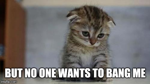 Sad kitten | BUT NO ONE WANTS TO BANG ME | image tagged in sad kitten | made w/ Imgflip meme maker
