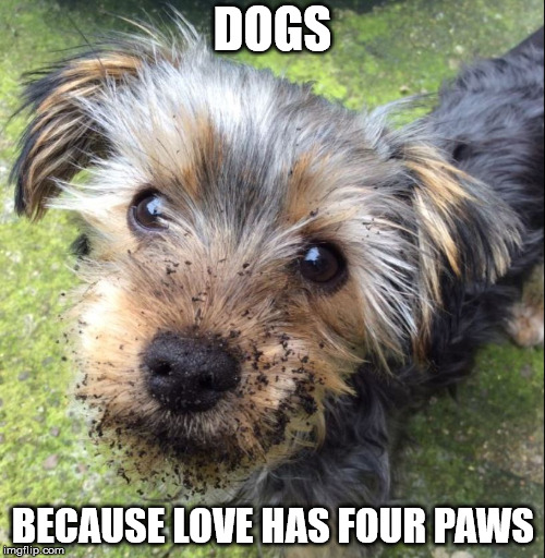 Wookie |  DOGS; BECAUSE LOVE HAS FOUR PAWS | image tagged in wookie | made w/ Imgflip meme maker