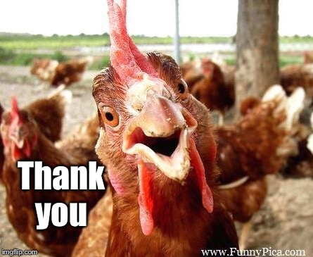 Chicken | Thank you | image tagged in chicken | made w/ Imgflip meme maker