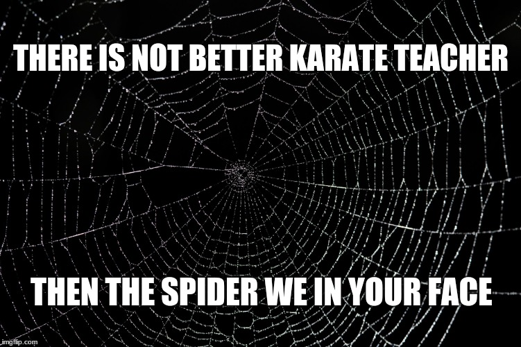 Spider Web | THERE IS NOT BETTER KARATE TEACHER THEN THE SPIDER WE IN YOUR FACE | image tagged in spider web | made w/ Imgflip meme maker