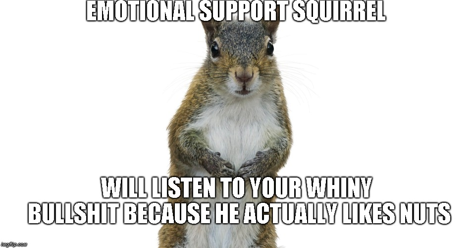 Emotional support squirrel | EMOTIONAL SUPPORT SQUIRREL WILL LISTEN TO YOUR WHINY BULLSHIT BECAUSE HE ACTUALLY LIKES NUTS | image tagged in emotional support squirrel,nuts | made w/ Imgflip meme maker