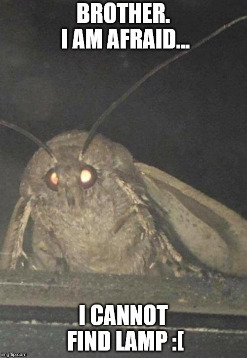 Moth | BROTHER. I AM AFRAID... I CANNOT FIND LAMP :[ | image tagged in moth | made w/ Imgflip meme maker