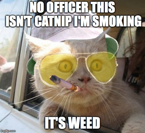 Fear And Loathing Cat Meme | NO OFFICER THIS ISN'T CATNIP I'M SMOKING IT'S WEED | image tagged in memes,fear and loathing cat | made w/ Imgflip meme maker
