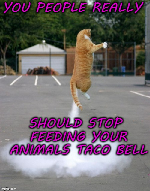 YOU PEOPLE REALLY SHOULD STOP FEEDING YOUR ANIMALS TACO BELL | image tagged in funny,meme,taco bell | made w/ Imgflip meme maker
