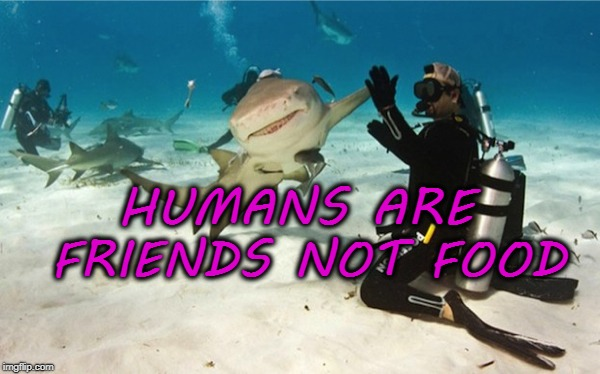 HUMANS ARE FRIENDS NOT FOOD | image tagged in funny,meme,fish,finding nemo,dory | made w/ Imgflip meme maker