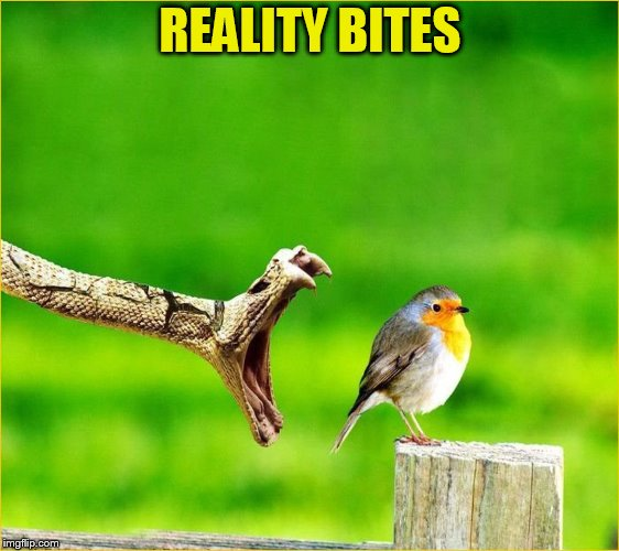Snake Reality Bites | REALITY BITES | image tagged in snake reality bites | made w/ Imgflip meme maker