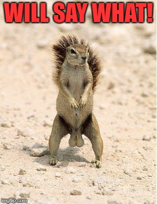 nuts | WILL SAY WHAT! | image tagged in nuts | made w/ Imgflip meme maker