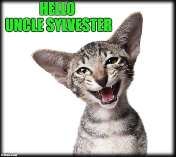 kitten | HELLO UNCLE SYLVESTER | image tagged in kitten | made w/ Imgflip meme maker