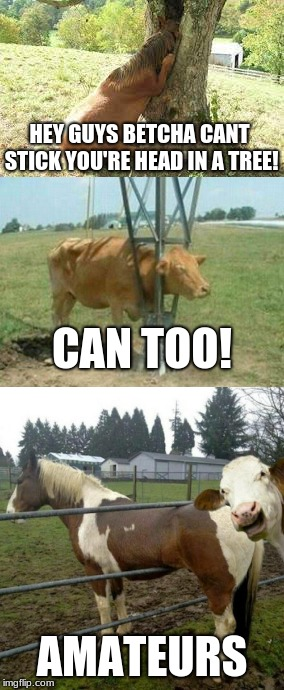 HEY GUYS BETCHA CANT STICK YOU'RE HEAD IN A TREE! AMATEURS CAN TOO! | image tagged in memes,funny,farm | made w/ Imgflip meme maker