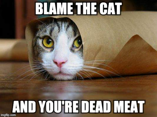 BLAME THE CAT AND YOU'RE DEAD MEAT | made w/ Imgflip meme maker