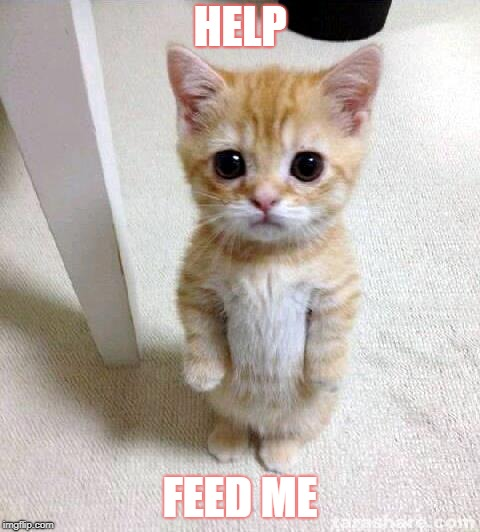Cute Cat | HELP FEED ME | image tagged in memes,cute cat | made w/ Imgflip meme maker
