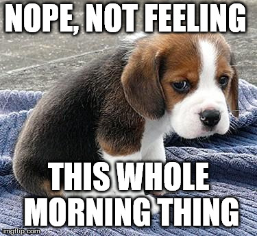 sad puppy | NOPE, NOT FEELING THIS WHOLE MORNING THING | image tagged in sad puppy | made w/ Imgflip meme maker