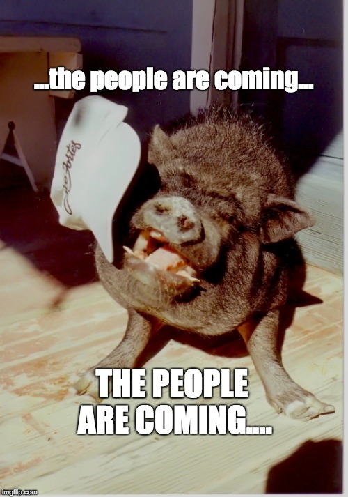 THE PEOPLE ARE COMING.... ...the people are coming... | image tagged in wild boar | made w/ Imgflip meme maker