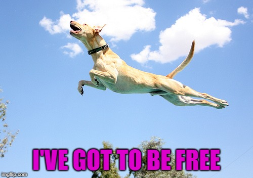 I'VE GOT TO BE FREE | made w/ Imgflip meme maker