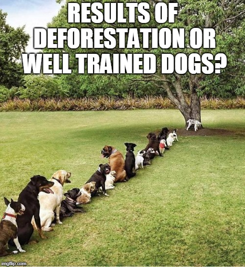 Help the dogs...save the trees! | RESULTS OF DEFORESTATION OR WELL TRAINED DOGS? | image tagged in dogs,dog,conservation,trees,tree,memes | made w/ Imgflip meme maker