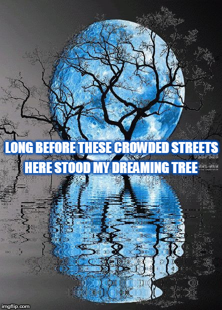 DMB The Dreaming Tree | LONG BEFORE THESE CROWDED STREETS HERE STOOD MY DREAMING TREE | image tagged in dmb,dave matthews band,the dreaming tree,moon,full moon,tree | made w/ Imgflip meme maker