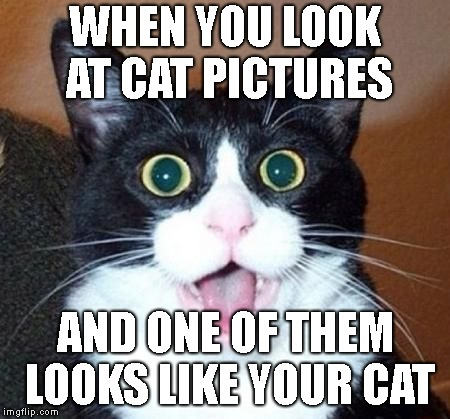 nani | WHEN YOU LOOK AT CAT PICTURES AND ONE OF THEM LOOKS LIKE YOUR CAT | image tagged in whoa cat,nani,cats,meow,memes,funny cat memes | made w/ Imgflip meme maker