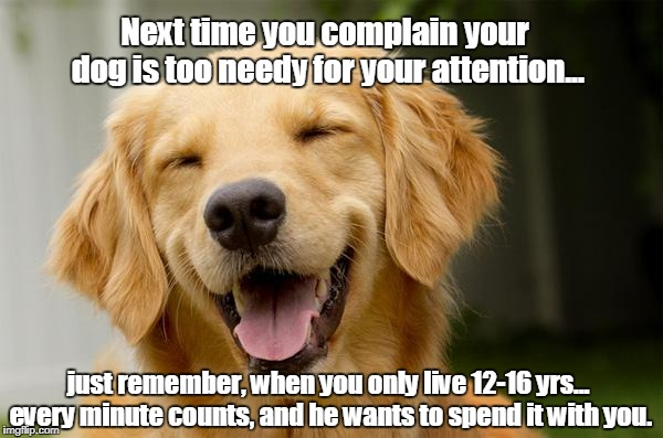 One of those days when you miss them so much. | Next time you complain your dog is too needy for your attention... just remember, when you only live 12-16 yrs... every minute counts, and h | image tagged in happy dog,love your dog | made w/ Imgflip meme maker