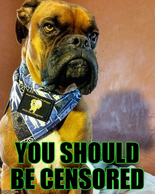 Grumpy Dog | YOU SHOULD BE CENSORED | image tagged in grumpy dog | made w/ Imgflip meme maker