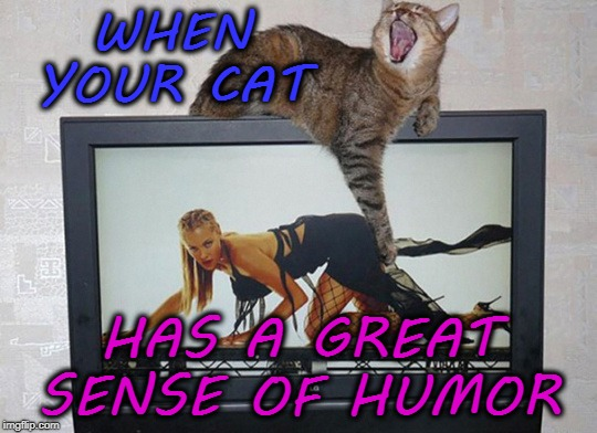 WHEN YOUR CAT HAS A GREAT SENSE OF HUMOR | image tagged in funny,cats,humor | made w/ Imgflip meme maker