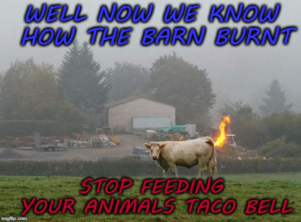 WELL NOW WE KNOW HOW THE BARN BURNT STOP FEEDING YOUR ANIMALS TACO BELL | image tagged in funny,meme,taco bell,farts | made w/ Imgflip meme maker
