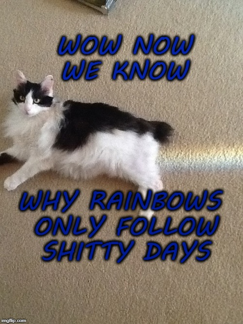WOW NOW WE KNOW WHY RAINBOWS ONLY FOLLOW SHITTY DAYS | image tagged in cats,rainbow,shitty,days | made w/ Imgflip meme maker