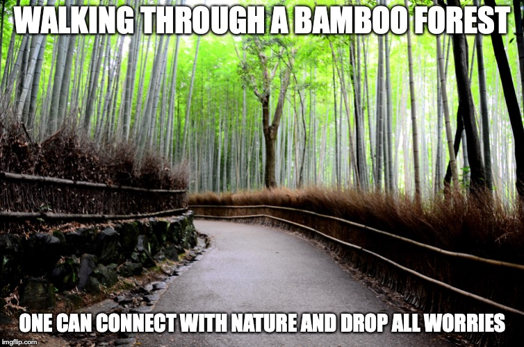 Bamboo Forest |  WALKING THROUGH A BAMBOO FOREST; ONE CAN CONNECT WITH NATURE AND DROP ALL WORRIES | image tagged in bamboo,memes,forest,nature | made w/ Imgflip meme maker