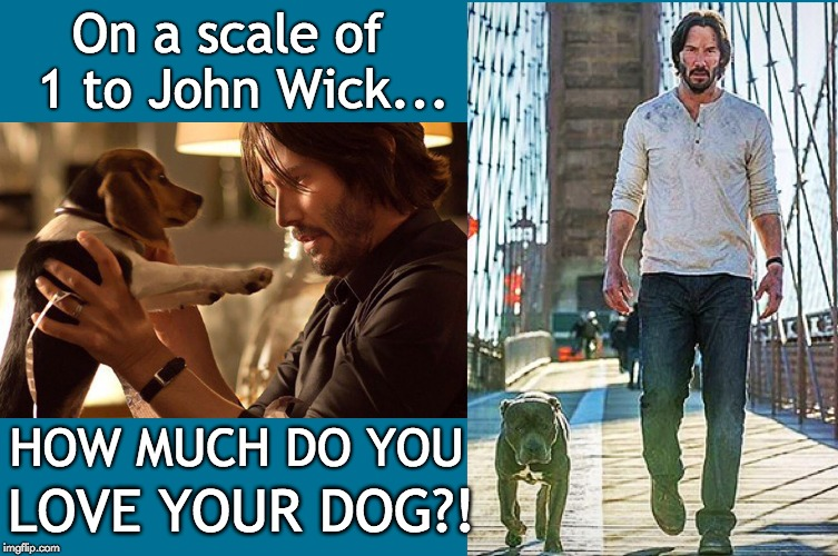 On a scale of 1 to John Wick... | On a scale of  1 to John Wick... HOW MUCH DO YOU LOVE YOUR DOG?! | image tagged in dog,dogs,john wick,pets,pitbull | made w/ Imgflip meme maker