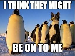 This undercover gig is getting old | I THINK THEY MIGHT BE ON TO ME | image tagged in cats,penguins | made w/ Imgflip meme maker