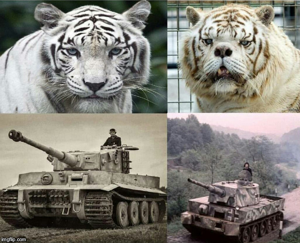 profile pic vs real life | image tagged in ww2,tank,tiger,king | made w/ Imgflip meme maker